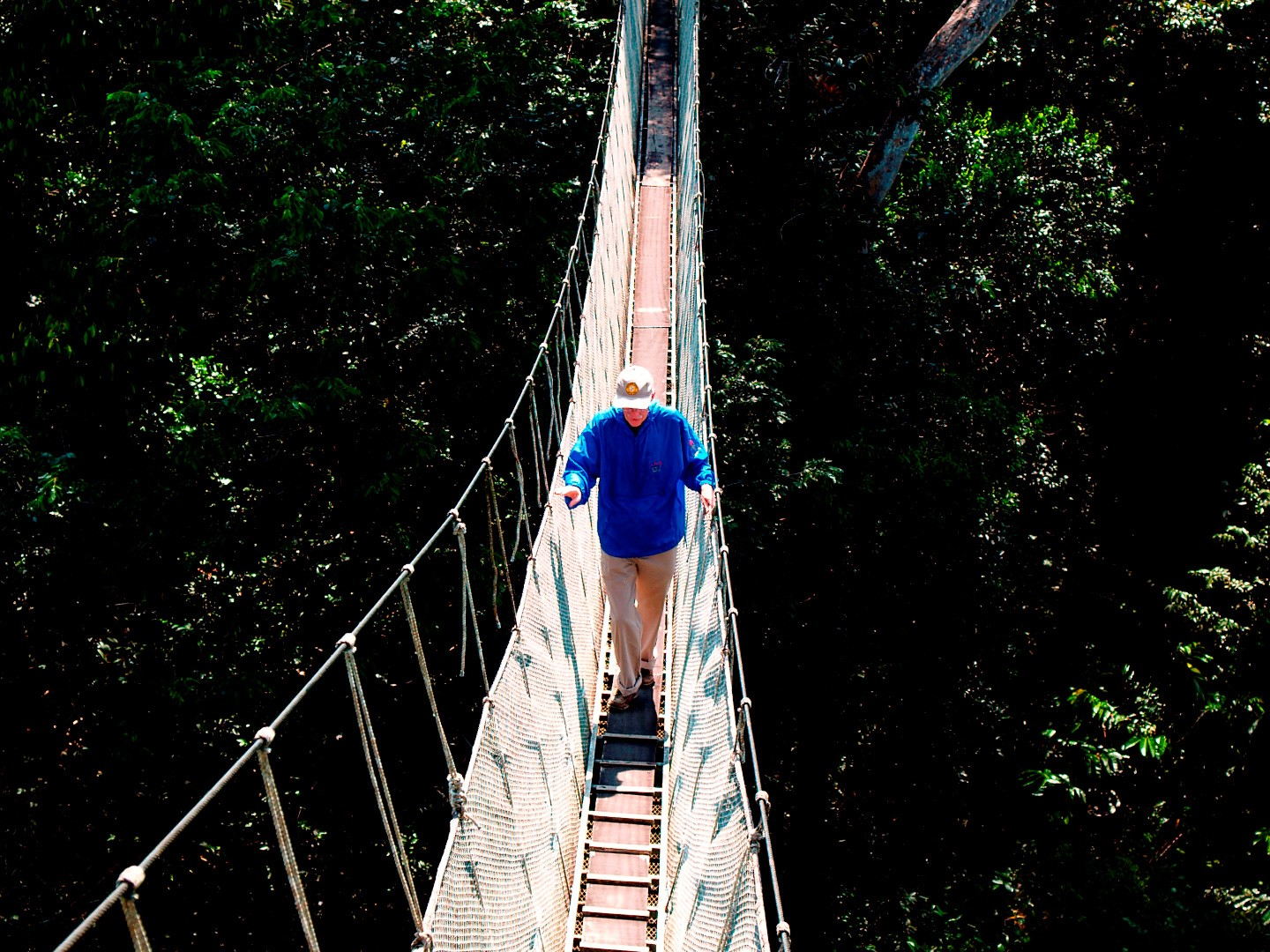 Ceiba Tops with Canopy Walkway Special Reception at the airport brief city orientation and transfer to the Explorama dock. Twenty-five mile journey down ... & Amazon River | Trips Amazon River | Amazon Lodge Iquitos | Amazon ...